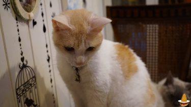 猫カフェで猫VSパンケーキマン?美味しい厚焼きパンケーキ★猫音(にゃおん)(大阪/日本橋/恵美須町)