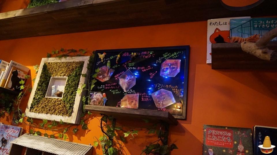 猫カフェ 猫音(にゃおん)のプレーン パンケーキ (大阪/恵美須町)パンケーキマン